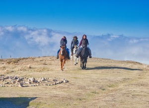 colonie de vacances et équitation pour les enfants