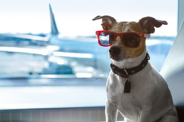 Voyage en avion : comment calmer votre chien ?
