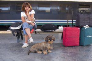 France : les meilleurs road trip à faire avec votre chien